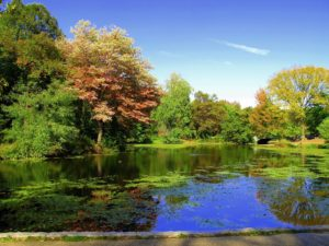 view of lake in park with green trees